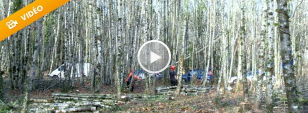 Le stockage de carbone peut-il doper l'exploitation forestière ?