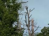 Climat : les forêts françaises suffoquent