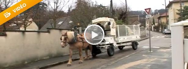 La collecte sélective des sapins après Noël, c'est bien… A cheval c'est encore mieux !