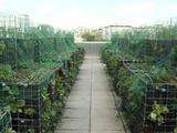 Agriculture urbaine : nouveau potager sur un toit parisien