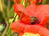 Agriculture : compter les insectes pour mieux cultiver son champ