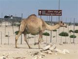 Les Emirats arabes unis : de rois du pétrole à rois du soleil ?