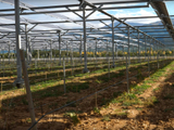 Les Pyrénées-Orientales accueillent une centrale agrivoltaïque d'un nouveau genre
