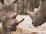 Le Zoo safari de Thoiry transforme son fumier en énergie verte