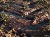 Yvelines : la rupture d'un pipeline de pétrole pollue champs et cours d'eau