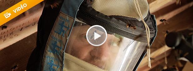Chasseur de frelon asiatique, un professionnel très demandé