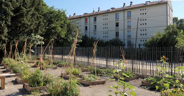Ferme urbaine: lorsque l'agriculture en ville crée du lien social