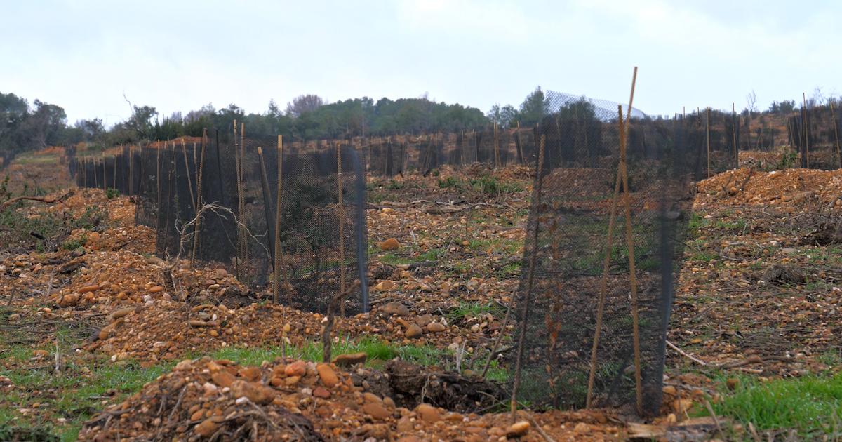 Le label bas carbone, un outil pour replanter des forêts