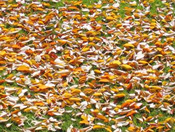 photo tapis de feuilles mortes